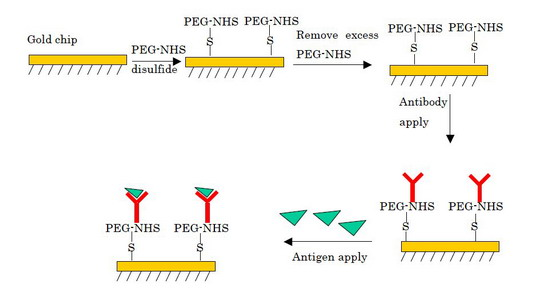 Fig.1 Flow of antigen-antibody interaction